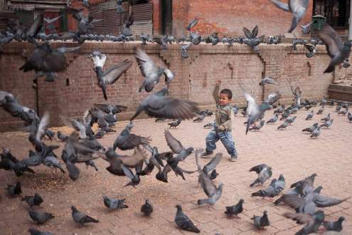 A child plays with pigeons at Pashupatinath Temple, Kathmandu