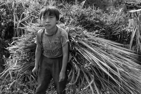 A boy is carrying home his crop